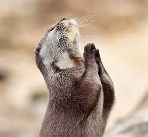 Squirrel prays